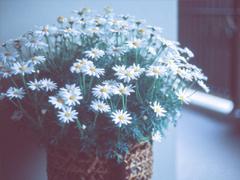 最美好的爱情说说大全 简单幸福说说心情短语